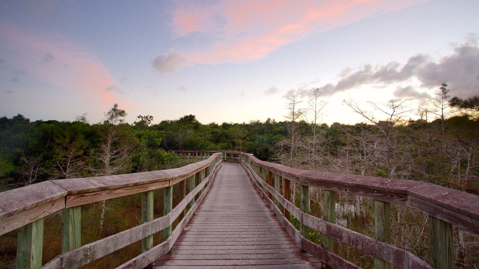 エバーグレーズ国立公園の画像 p1_25