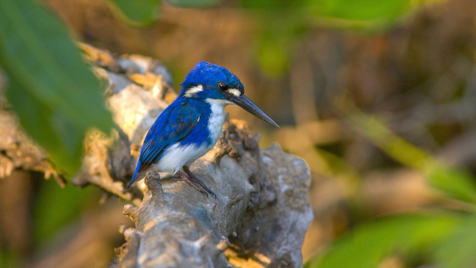 カカドゥ国立公園の画像 p1_34