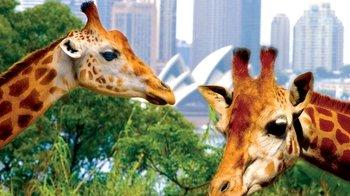 ,Zoo de Sídney,Crucero por Sídney,Taronga Zoo