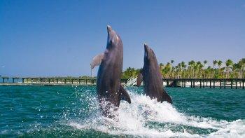 ,Nadar con delfines