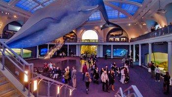 Ver la ciudad,City tours,Tours andando,Walking tours,Museo de Historia Natural,American Museum of Natural History,Con guía