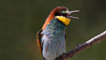 ,Aves en Parque Natural Ría Formosa