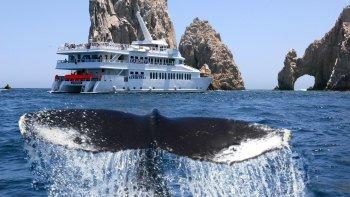 ,Crucero por el cabo,Avistamiento de Ballenas