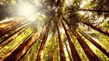 ,Excursión a Muir Woods,Excursion to Muir Woods,Excursión a Sausalito,Excursion to Sausalito