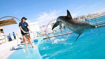 Actividades,Actividades acuáticas,Nadar con delfines