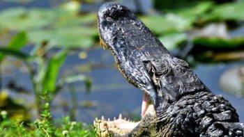 Salir de la ciudad,Excursiones de más de un día,Excursión Everglades