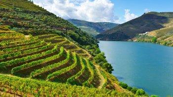 ,Con visita a bodegas incluida,Cata de vinos,Excursión a Valle del Duero