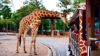 ,Safari por Chiang Mai