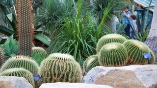 Real Jardín Botánico (Kew Gardens)