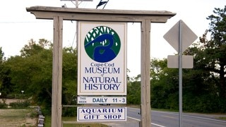 Cape Cod Museum of Natural History which includes signage