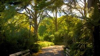 Mona Vale showing a garden