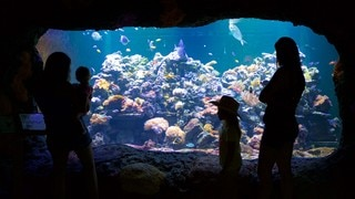 Virginia Aquarium and Marine Science Center which includes marine life as well as a family