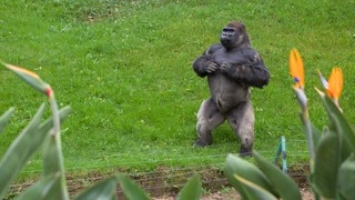 Parque Zoologico de Chapultepec