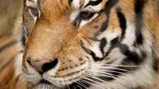 Jukani Wildlife Park
