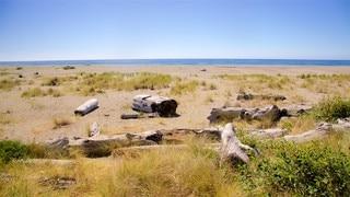Gold Bluffs Beach