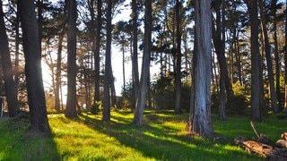 Presidio of San Francisco which includes forest scenes, landscape views and a garden