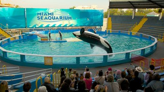 Miami Seaquarium featuring a pool, marine life and whale watching