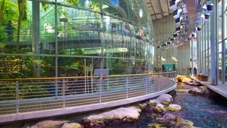 California Academy of Sciences featuring views, interior views and modern architecture