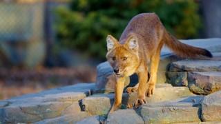 미네소타 동물원