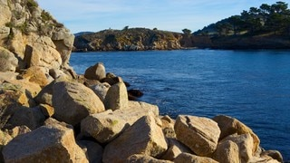 Point Lobos State Reserve which includes landscape views and rugged coastline
