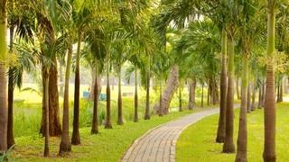 Lumpini Park showing landscape views, tropical scenes and a garden