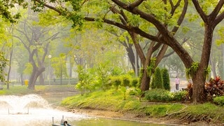Lumpini Park which includes landscape views, a garden and forests