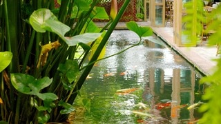 Jim Thompson House showing a pond