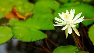 Tao Dan Park featuring flowers