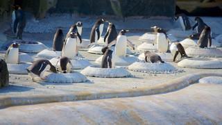 Zoo di Edimburgo