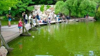 Palmengarten which includes a pond and a park as well as a large group of people