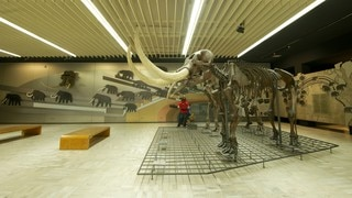 Senckenberg Museum featuring interior views