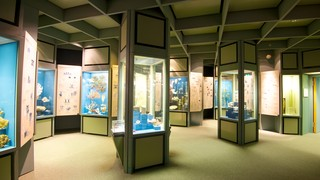 Senckenberg Museum which includes interior views