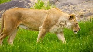 우드랜드 파크 동물원