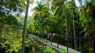 Mount Tamborine featuring tropical scenes, views and hiking or walking