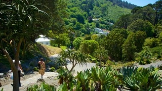 Wellington Botanic Garden showing hiking or walking and a park