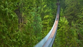 Capilano Suspension Bridge which includes a suspension bridge or treetop walkway and forest scenes