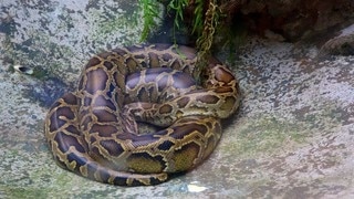 Saigon Zoo and Botanic Garden showing zoo animals and dangerous animals