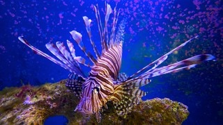 John Pennekamp Coral Reef State Park featuring marine life