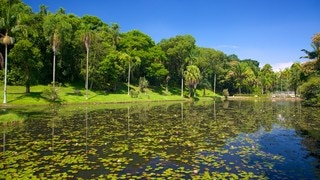 Sao Paulo Botanical Garden which includes a pond