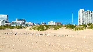 King's Beach