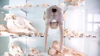 Bern Natural History Museum
