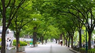 나카노시마 공원