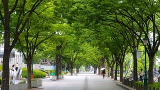 Parc de Nakanoshima