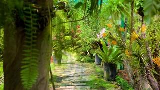 Saigon Zoo and Botanic Garden featuring a garden