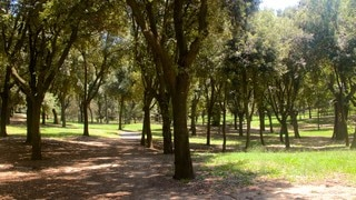 Villa Borghese showing a park