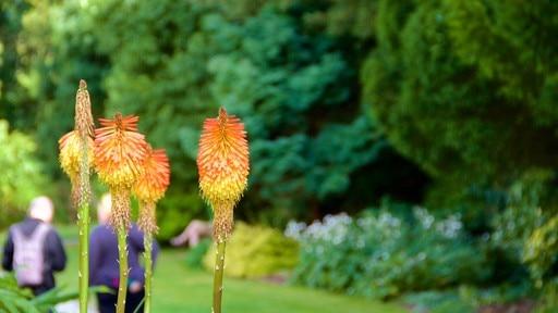 Trelissick Gardens