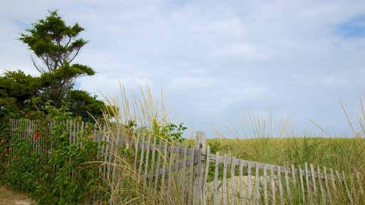 Nauset Beach featuring tranquil scenes