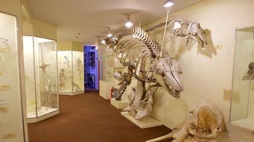 พิพิธภัณฑ์ประวัติศาสตร์ธรรมชาติ Booth