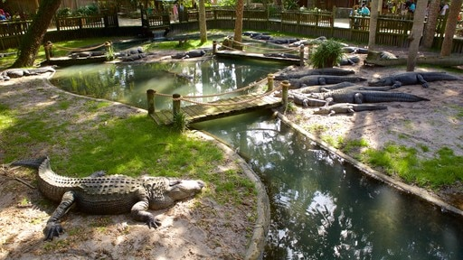 St. Augustine Alligator Farm Zoological Park showing zoo animals and dangerous animals