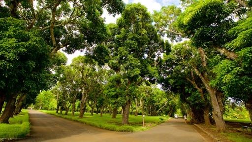Pamplemousses Botanical Garden (giardino botanico)